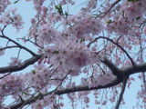 2014.3.30tokyo01.JPG